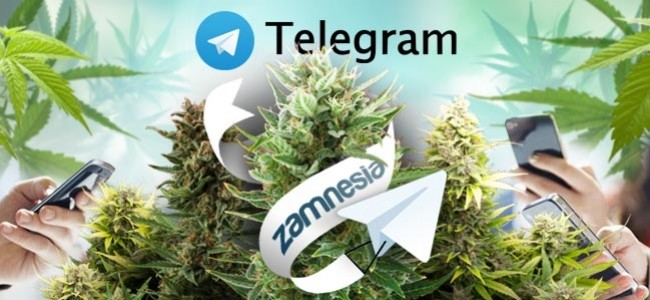 Best Telegram weed Plug